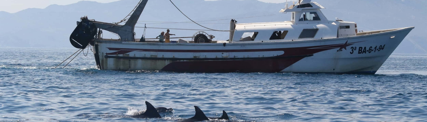 trawling net boat with three bottlenose dolphins